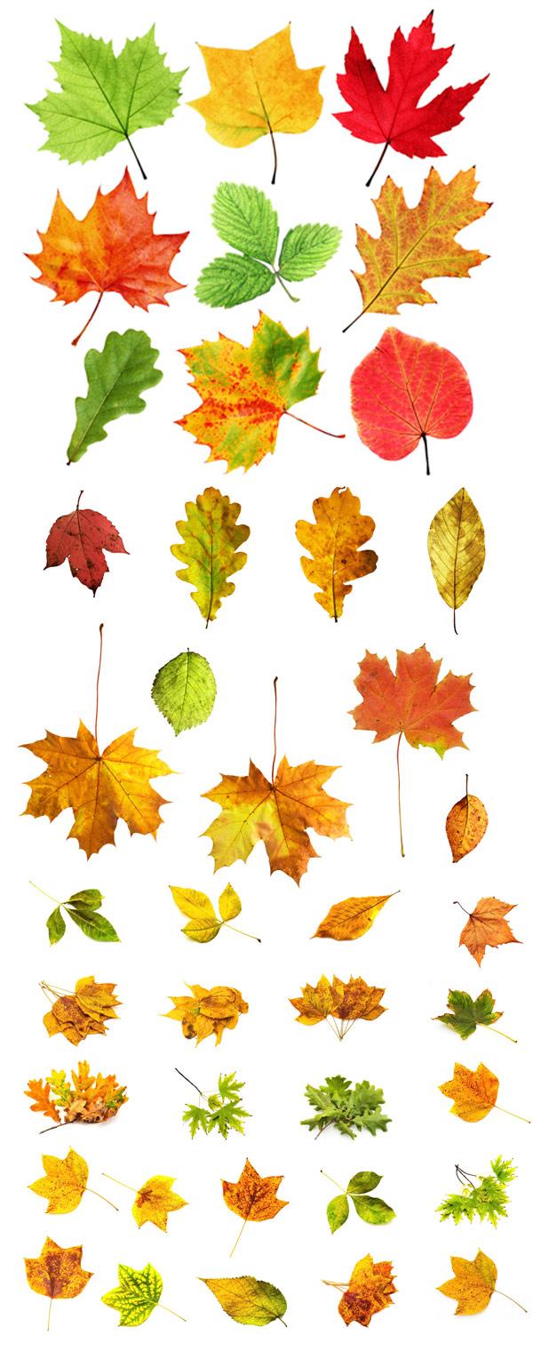 冬天树木落叶矢量图