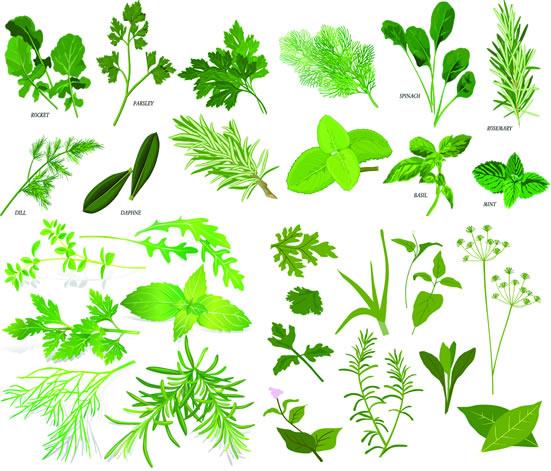 草本植物中草药