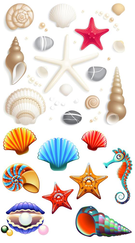 u53ef u7231 u5361 u901a u8d1d u58f3 seashell clipart freeware black and white seashell clip art black and white