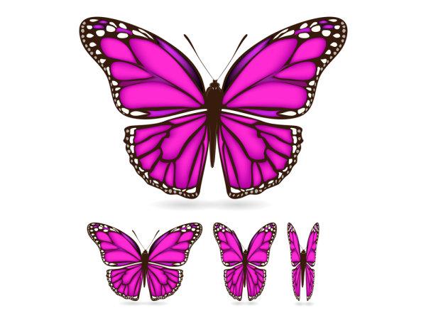 所需点数: 0点 关键词: 精美蝴蝶素材矢量素材,精美,蝴蝶,翅膀,花纹