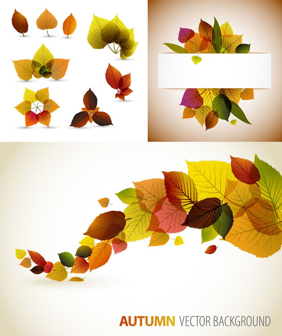 关键词: 秋天树叶矢量素材,清晰叶脉,秋天树叶,叶子脉络,叶片纹理,秋
