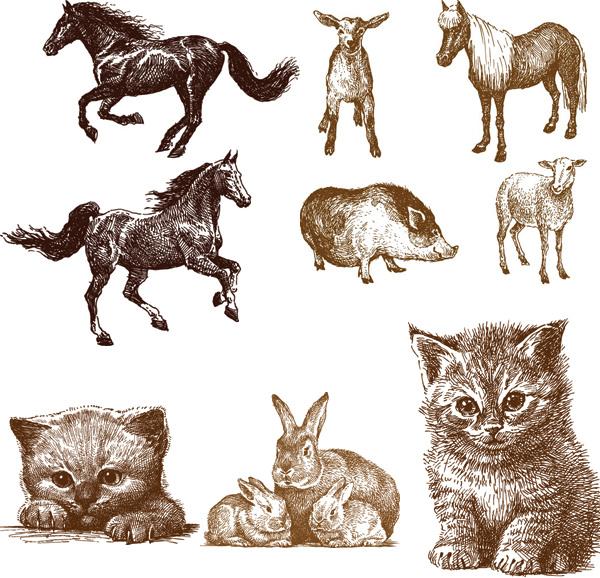 线稿动物矢量素材,线稿,线条,动物,野猪,素描,速写,小羊,马,兔子