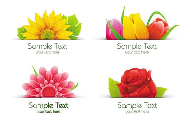 精美,鲜花,花瓣,花束,花卉,flowers,郁金香,矢量素材,eps格式 下载