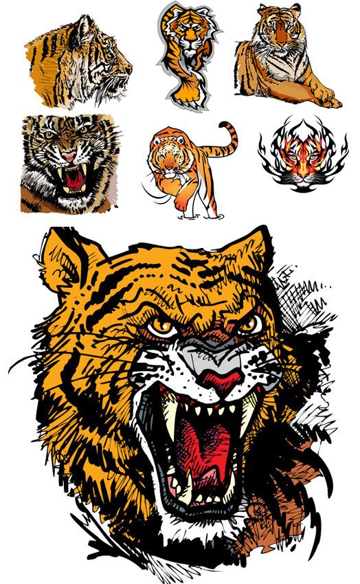 老虎图片矢量_矢量野生动物