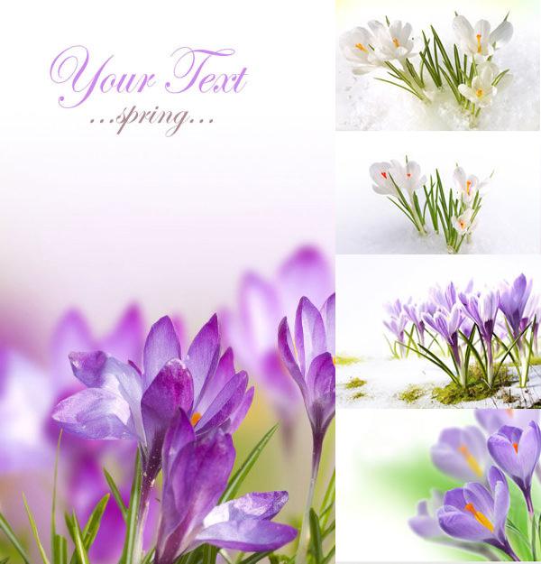 花草树木所需点数: 0 点 关键词: 商业图片,春天,鲜花,花朵,花卉