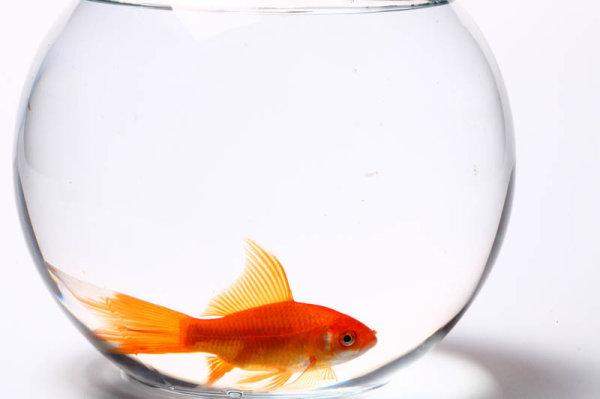 鱼缸和金鱼