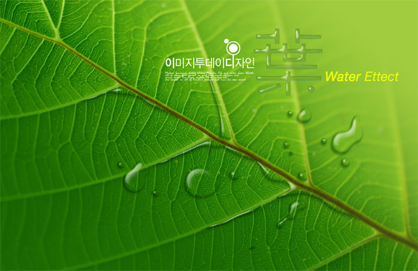 Green leaf of a water droplet
