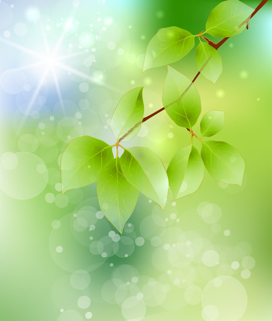 Branch green leaf background