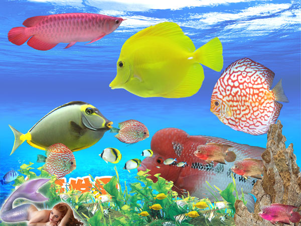 World of Aquarium pet fish