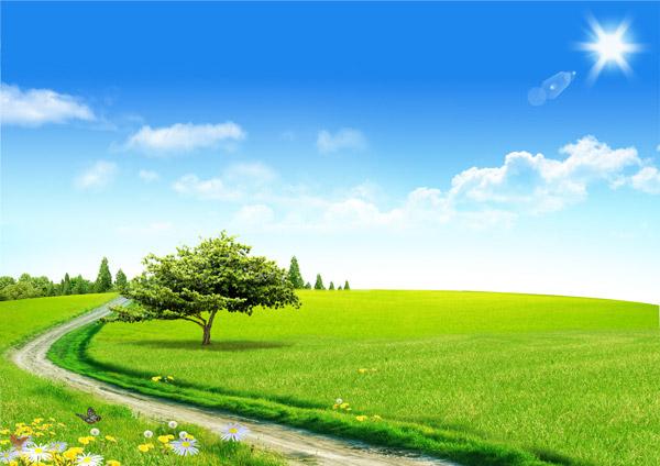 阳光,光线,光晕,蓝天,云彩,云朵,白云,大树,树木,树林,草原,绿色,清新