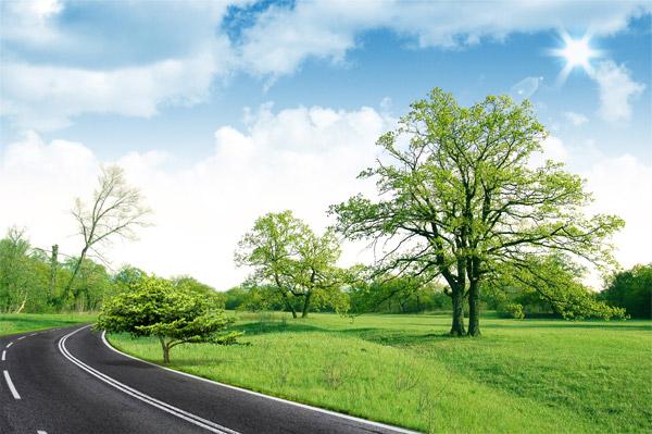 草地和公园大树