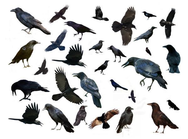 多种鸟分层