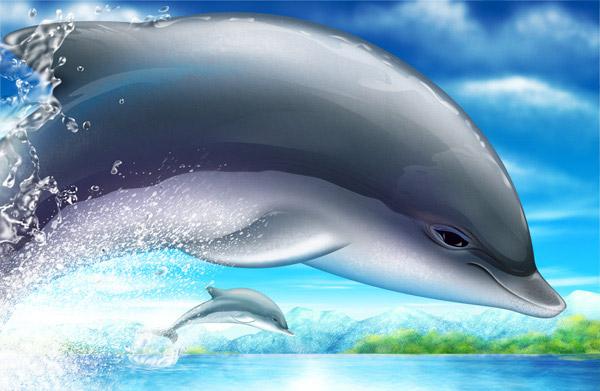 海豚PSD