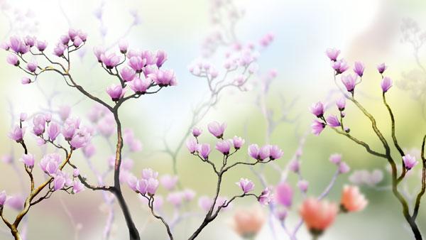 鲜花风景背景psd分层素材
