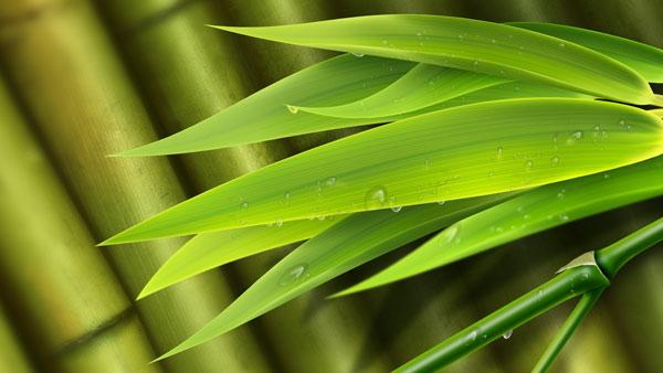竹叶底纹矢量图