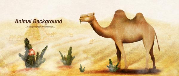 沙漠里的骆驼_素材中国sccnn.com