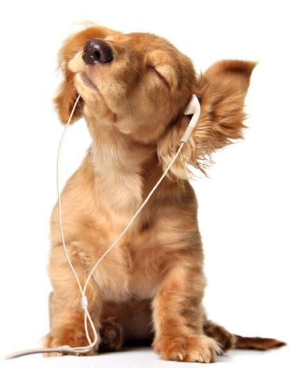 听音乐的狗狗