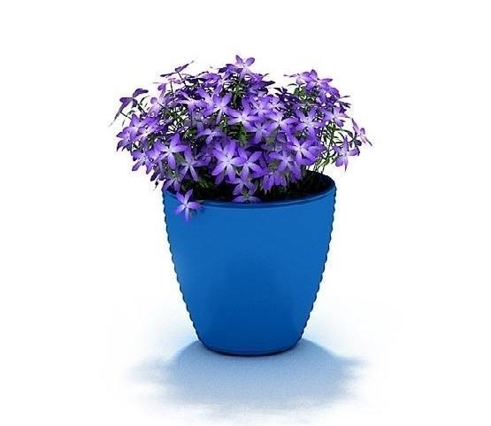 3d盆栽植物:绿植盆栽