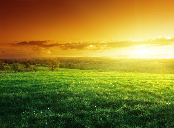 壁纸 草原 成片种植 风景 植物 种植基地 桌面 600_441