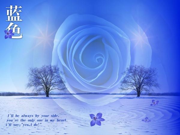 蓝色背景玫瑰紫金搞笑视频图片