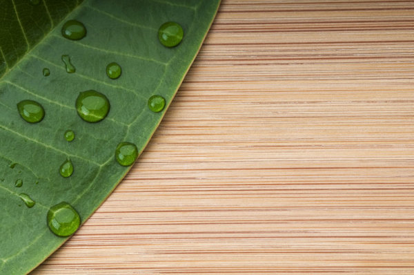 关键词: 绿叶木板背景高清图片,绿叶,叶子,木板,木头,木纹,纹理,背景