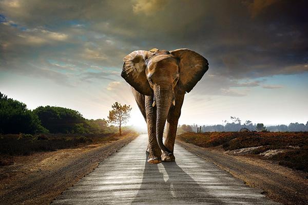 大象的世界图片