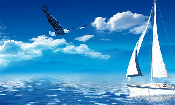 老鷹在藍天翱翔圖片