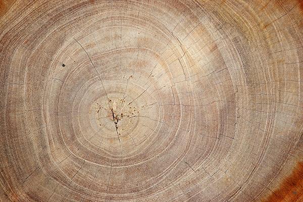 木头年轮图片