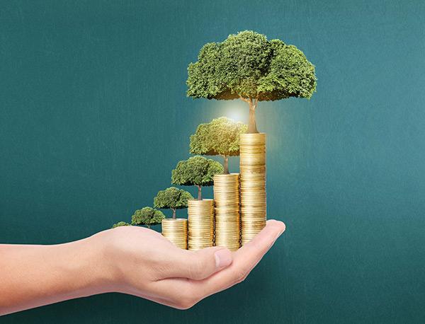 长在金币上的大树高清图片投资理财商务金