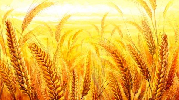 金黄色的小麦,金色阳光麦田,麦