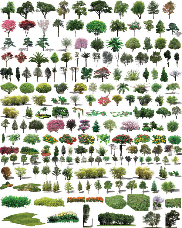 ps高清平面树木素材,ps树木平面图素材,ps高清树木素材