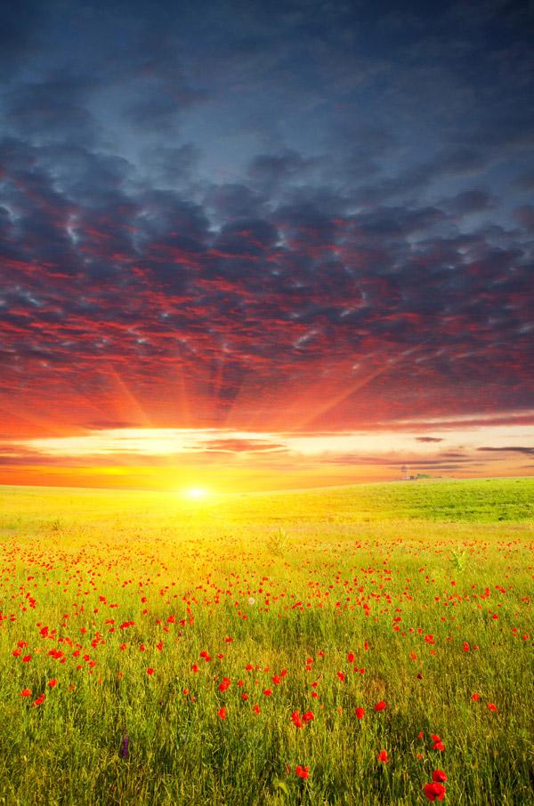 阳光下风景图片