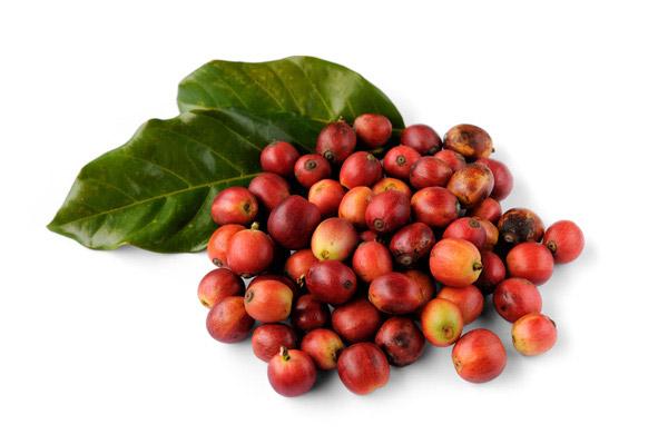 咖啡豆素材_咖啡豆手绘图_咖啡豆背景图片