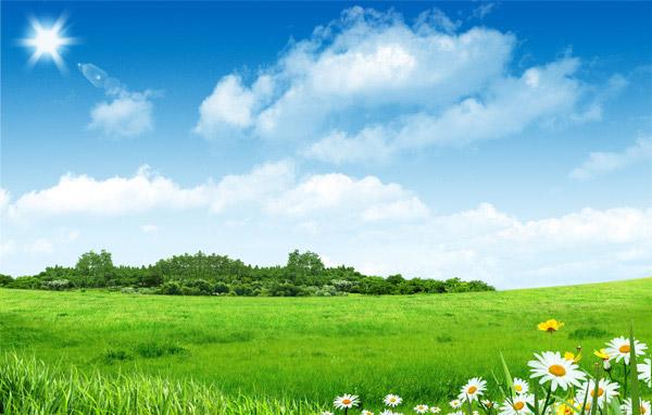 草地和树林图片