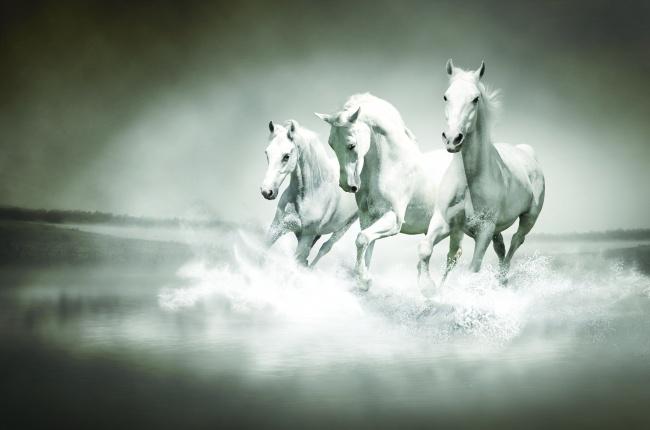 奔跑的白马图片