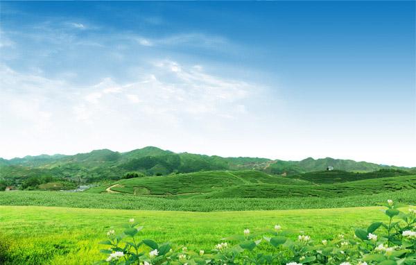 绿色山坡茶园美景PSD分层素材下载,蓝天,天空,云彩,云朵,白云,绿色,绿草,环保,草地,草皮,茶园,山坡,花朵,鲜花,茶花,植物,种植园,大自然,风景,风光,山峰,山峦,自然风景,自然美景,茉莉花,花卉,田园风光,广告设计模板,PSD分层素材,源文件