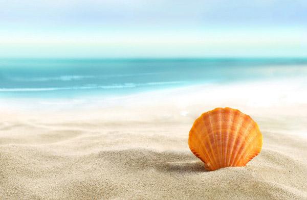关键词: 立在海滩的贝壳高清图片下载,立在海滩,海滩,沙滩,大海,贝壳
