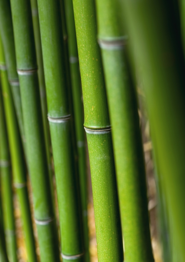 HD green bamboo