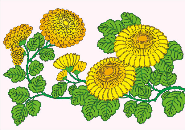 0 点 关键词: 工笔画菊花矢量素材,手绘工笔画,菊花,精美花卉,工笔画