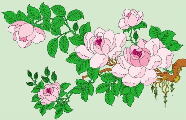 0 点 关键词: 精美工笔画矢量素材,工笔画,工笔花草,精美花卉,木棉花