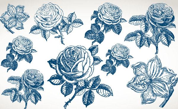 蓝色素描玫瑰花朵