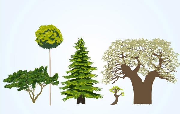 树木种类图片及名称