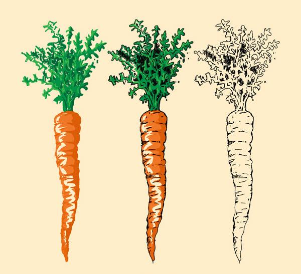 彩绘胡萝卜