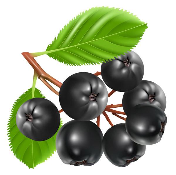 素材分类: 矢量水果所需点数: 0 点 关键词: 新鲜蓝莓设计矢量素材