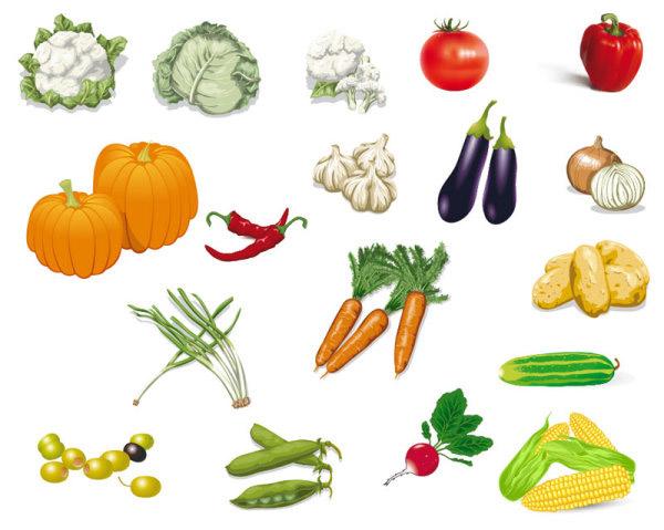 蔬菜种类图片及名称