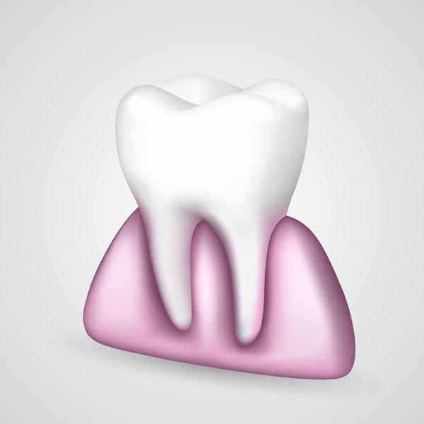 牙齿与牙龈