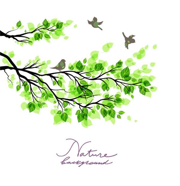 绿树叶子与小鸟