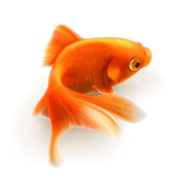 漂亮的小金鱼