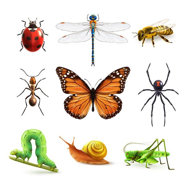 0 点 关键词: 卡通昆虫图标设计矢量素材,昆虫标本,七星瓢虫,蜻蜓