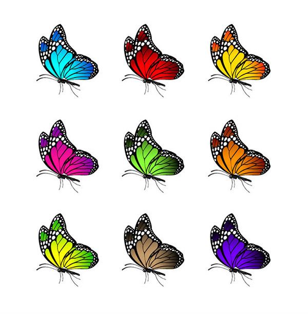 彩色蝴蝶侧面